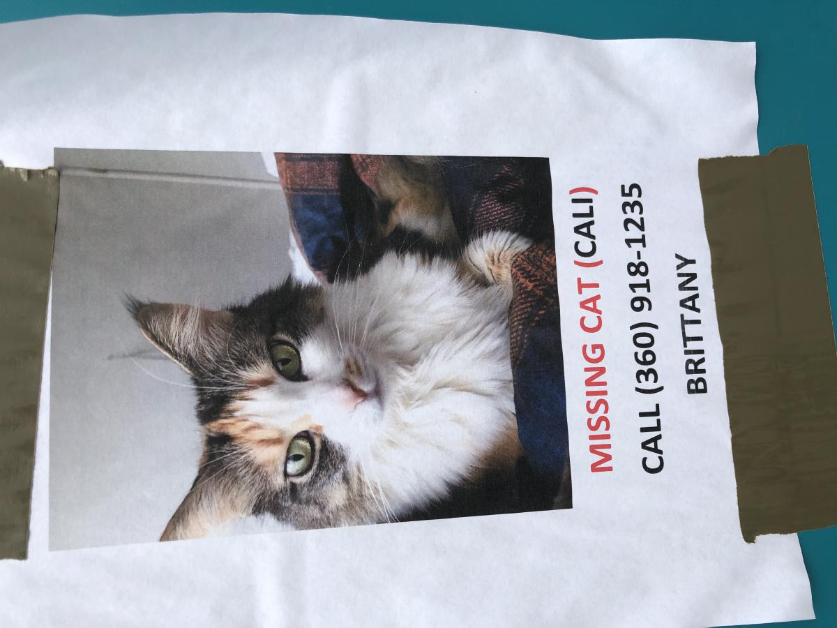 Image of Cali, Lost Cat