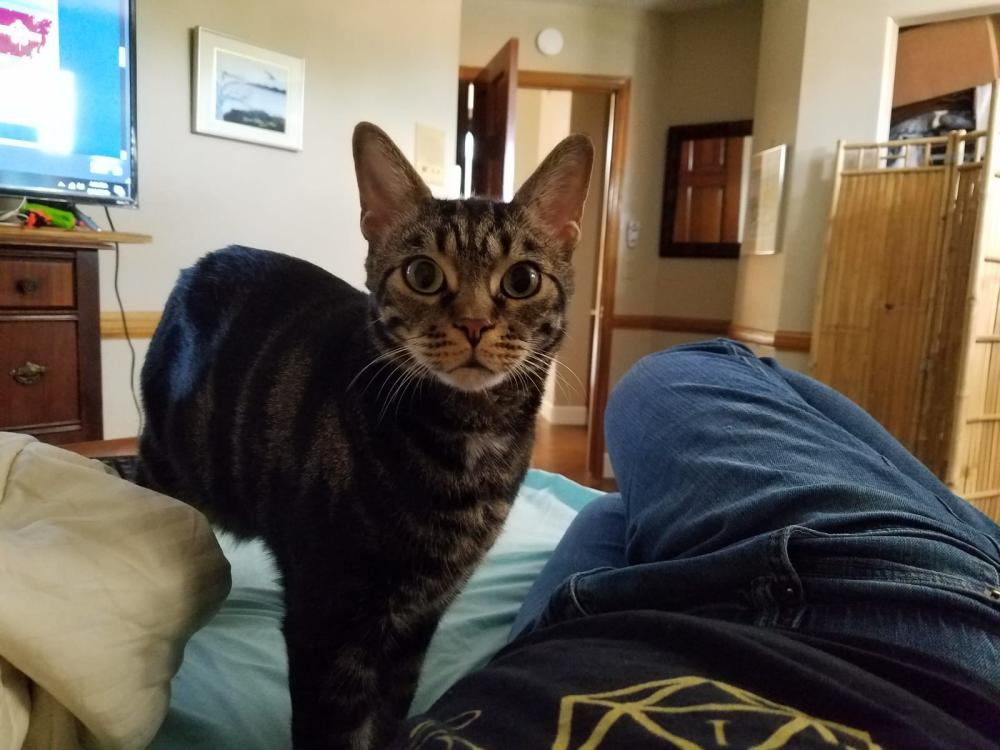 Image of Yoda, Lost Cat