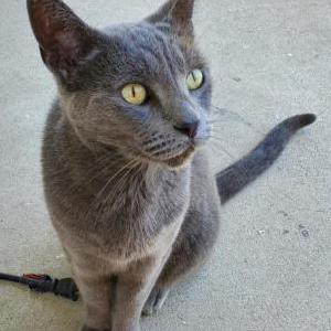 Image of Koffin, Lost Cat