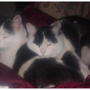 Image of Nibblez & Buddy, Lost Cat